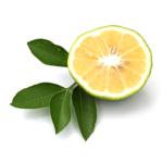 Huile-Essentielle-Bio-Bergamote