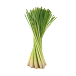 Huile-Essentielle-Bio-lemongrass