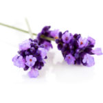 Lavandin-super-huiles-essentielles-AromaCare-Diffuseur