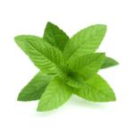 Menthe-spearmint-huiles-essentielles-AromaCare-Diffuseur