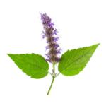 Patchouli-huiles-essentielles-AromaCare-Diffuseur