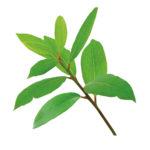 Saro-huile-essentielle-AromaCare-diffuseur-Capsule-Pollen