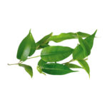 Tea-tree-huiles-essentielles-AromaCare-Diffuseur