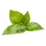 Basilic methyl huile essentielle AromaCare