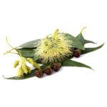 huile-essentielle-eucalyptus-citronne-anti-moustique-AromaCare-diffuseur